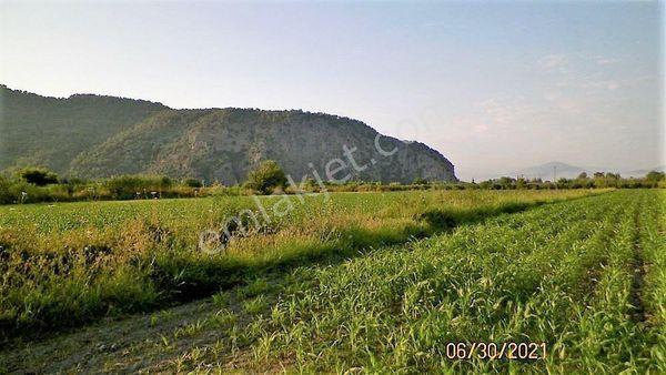 Muğla Ortaca Mergenli de satılık 10 000 m2 verimli arazi