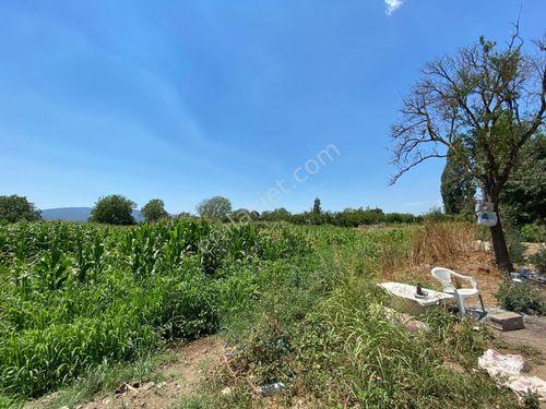 1160- Nazilli İsabeyli de Satılık Kargir Ev ve Portakal Bahçesi