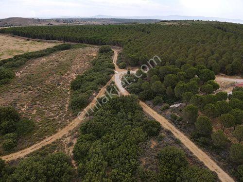 Çanakkale Bozcaada'da Yeşillikler Arasında Satılık Bağ