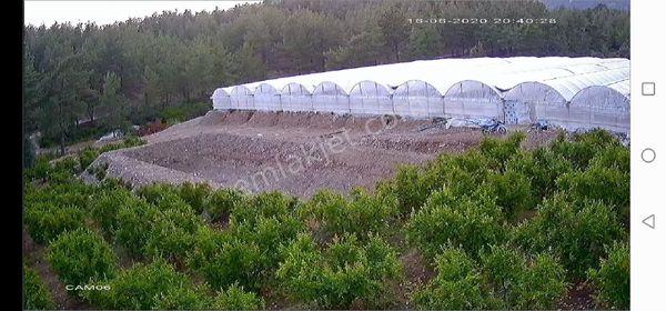 satılık çiftlik içersinde 900 adet nar ağacı 6.000m2 kapalı sera