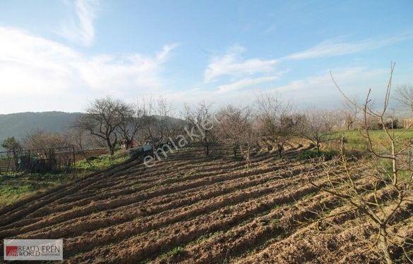 RWErenden Bursa /Osmangazi /Yigitali köyünde satılık arazi