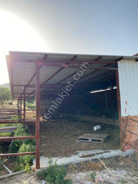Aliağa Karakuzu Mevkiinde 20 dönüm içinde hazır çiftlik