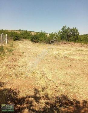 hanımın çiftliğinde müstakil tapulu arsa 695 mt tel örgülü