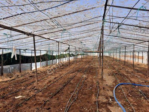 Muğla Ortaca Ekşiliyurt ta 3500 m2 arazi ve sera satılık