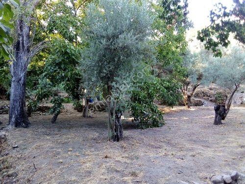 Sahibinden  Söke Güllübahçe'de Satılık Arsa/Hobi Bahçesi