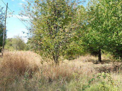 Düzlüce'de Satılık 4.972 m2 İçinde Meyve Ağaçları Olan Tarla