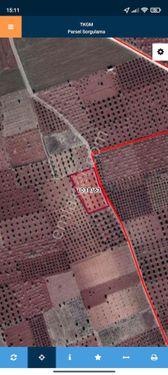 Sahibinden kilis merkez satılık zeytin 4922 metrekare