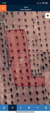 Sahibinden  kilis merkez satılık zeytin 3965 metrekare